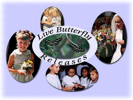 Live Butterfly Releases