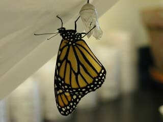 wait for butterfly to emerge