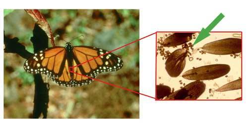 What Is Oe International Butterfly Breeders Assocation